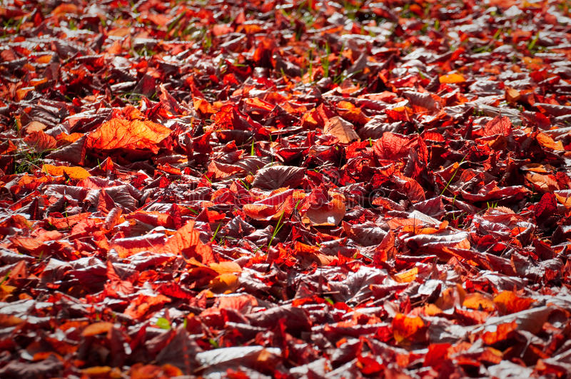 Download Autumn Red Leaves Royalty Free Stock Photo - Image: 34708695