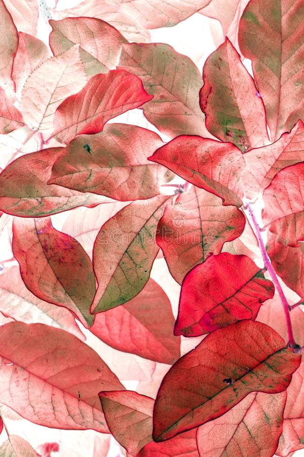 Autumn red leaves floral watercolor style pattern vertical background stock photos