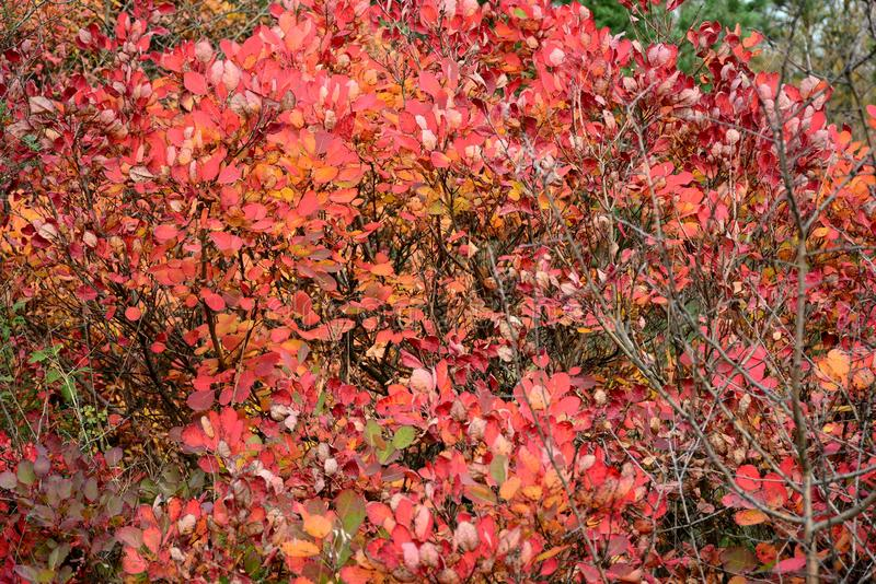 Autumn combination, red. Autumn is `red` season for obvious reason. Sometimes too red royalty free stock photo
