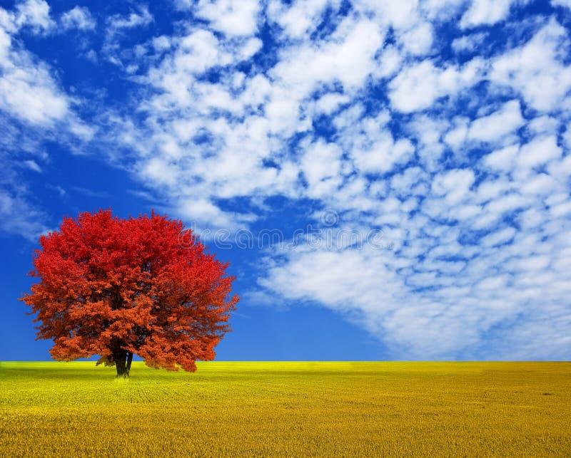 Autumn red tree stock photo