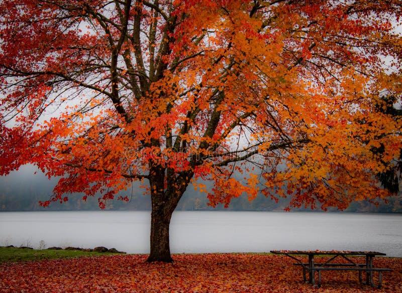 Autumn Red Tree och sidor för en höstpicknick royaltyfri bild