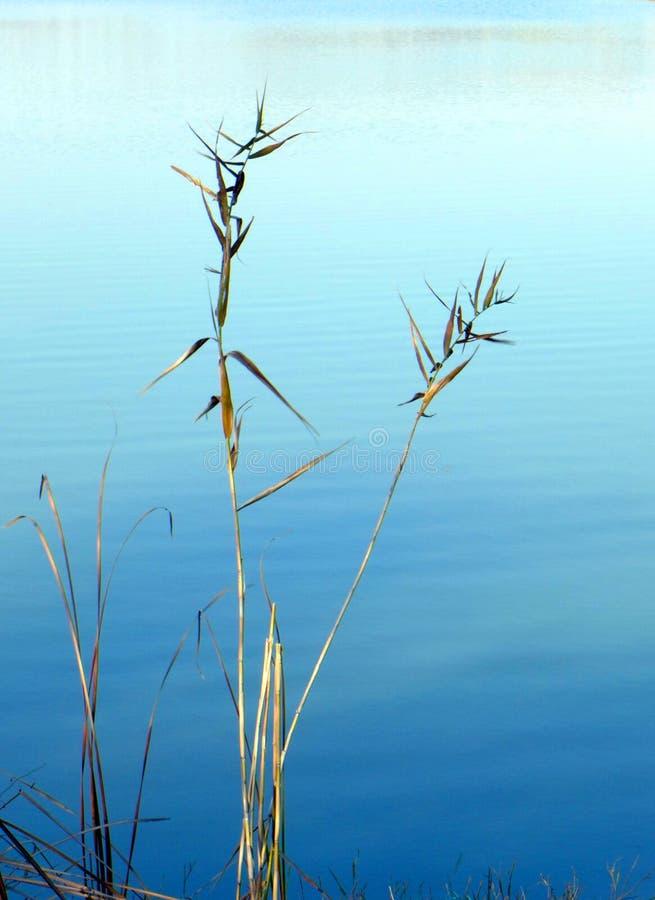 Zen nature. Autumn reeds beside lake royalty free stock photos