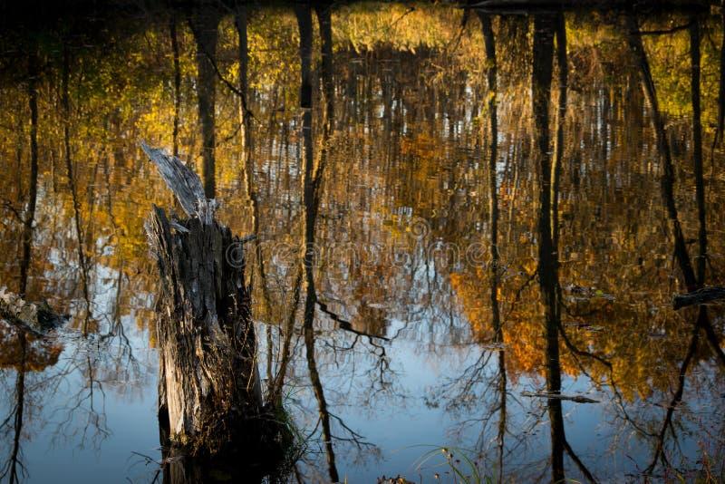 Autumn Reflection fotografia de stock