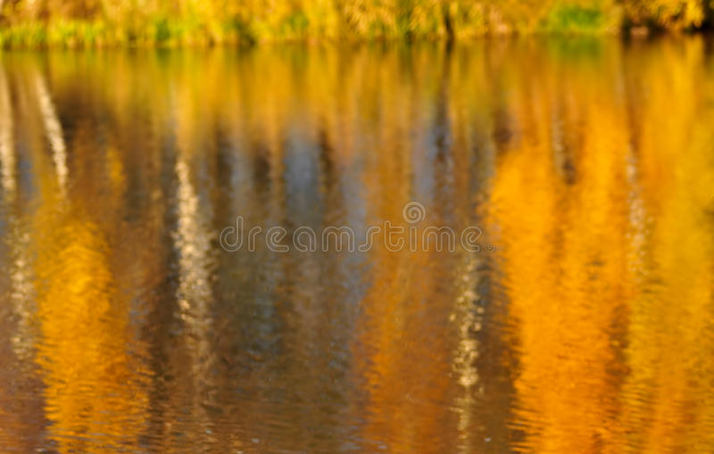 Autumn reflection. Bright orange autumn foliage is reflected in the lake royalty free stock image