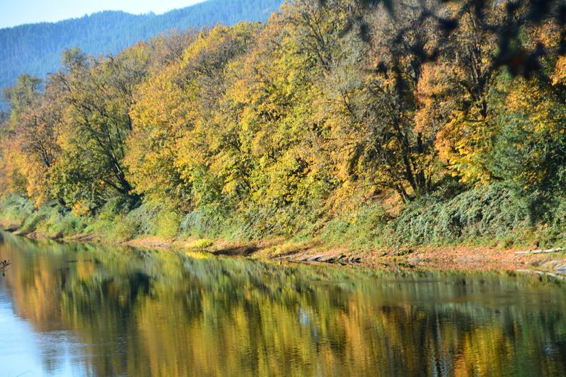 Autumn Reflection in Oregon`s Umpqua River. This is an autumn forest reflection in Oregon`s Umpqua River. The Umpqua is on the Pacific coast of Oregon in the stock photos