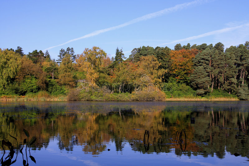 Download Autumn reflections stock photo. Image of moss, england - 3375324