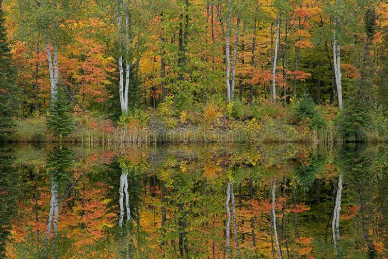 Autumn Reflections Alberta Lake stock images