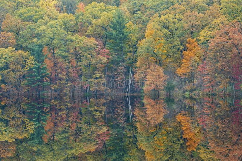 Autumn Reflections Hall Lake royalty free stock images