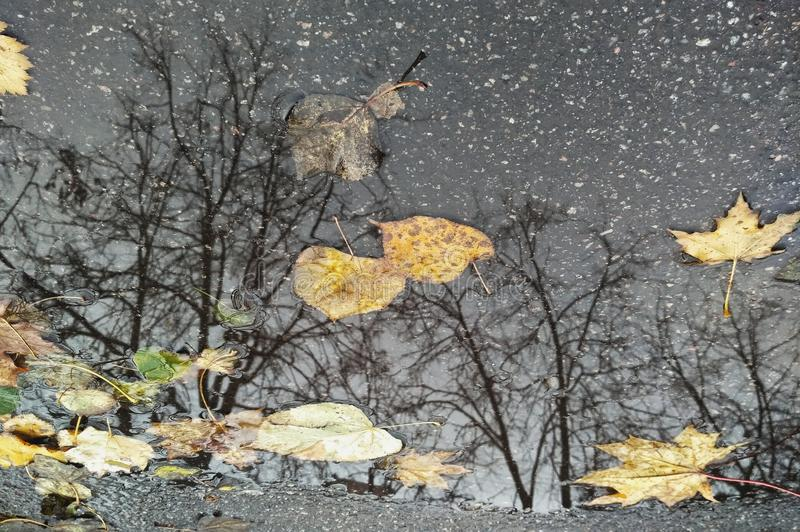 Autumn reflections. Just reflections in a puddle royalty free stock photos