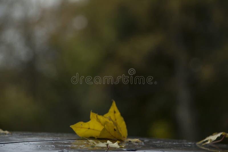 Autumn Reflections Onbeantwoorde liefde stock afbeeldingen
