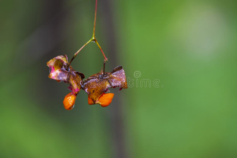 Autumn Regards immagini stock libere da diritti