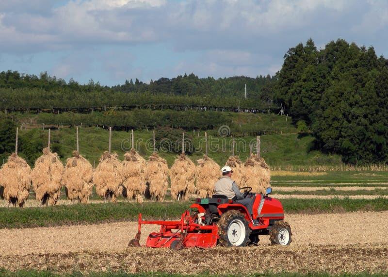 Autumn rice field stock photography