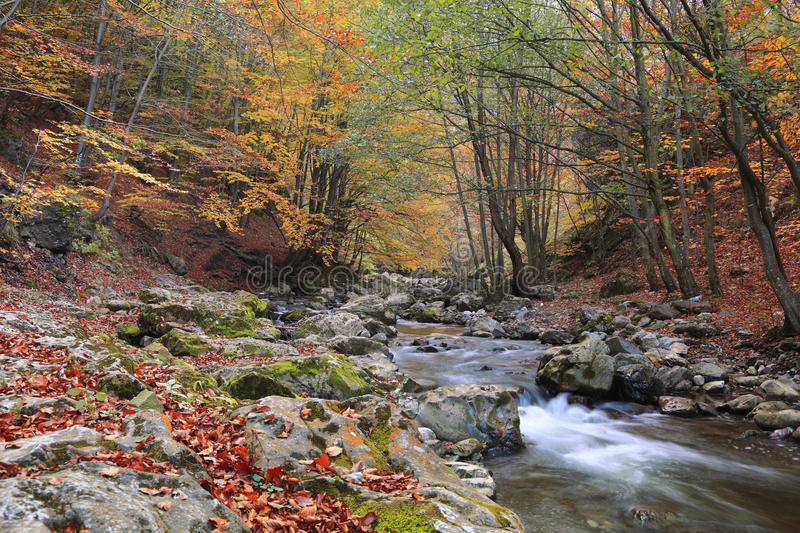 Download Autumn river stock photo. Image of colorful, brook, forest - 11924380