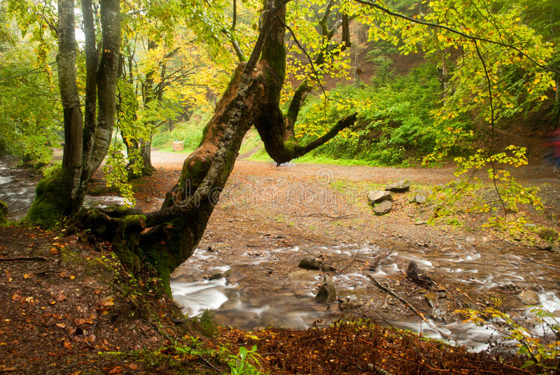 Download Autumn River Royalty Free Stock Images - Image: 20300509