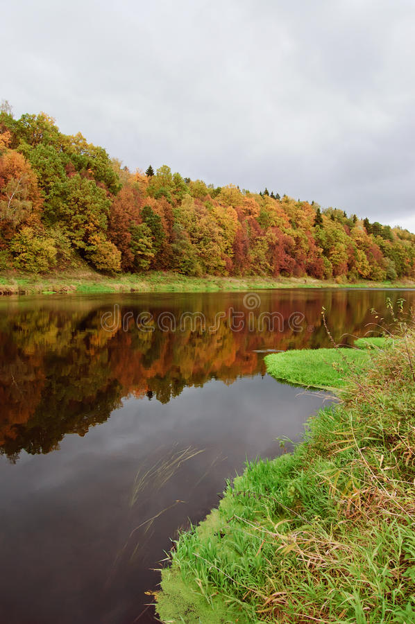 Download Autumn river stock photo. Image of green, lush, golden - 21652468