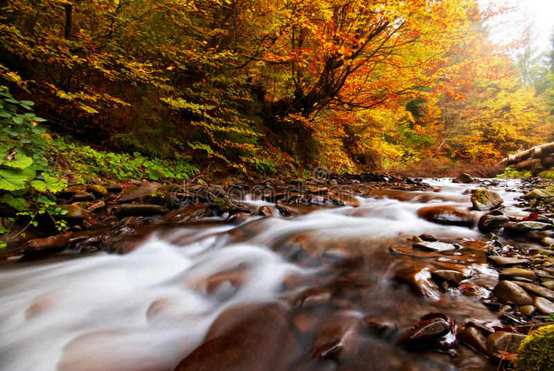 Autumn River. Flow in the forest stock photos