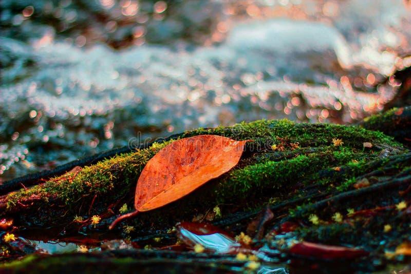 Autumn River com folha imagem de stock