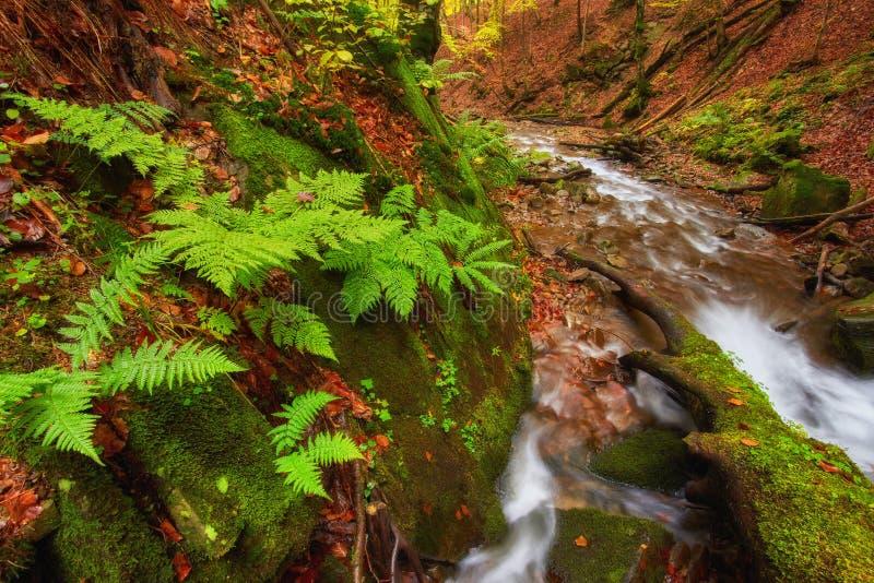 Autumn River Färgrik skog ovanför bergfloden Vatten under fotografering för bildbyråer