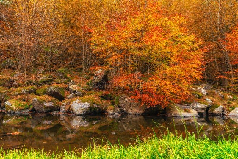 Autumn River Landscape Colors in aard stock afbeeldingen