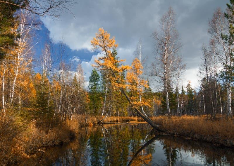 Autumn River Olha stockbilder