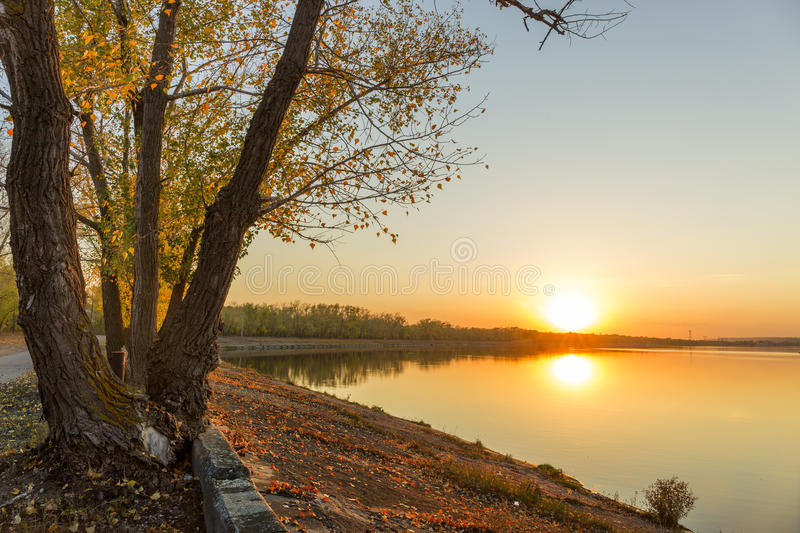 Autumn river tree sunset. stock images