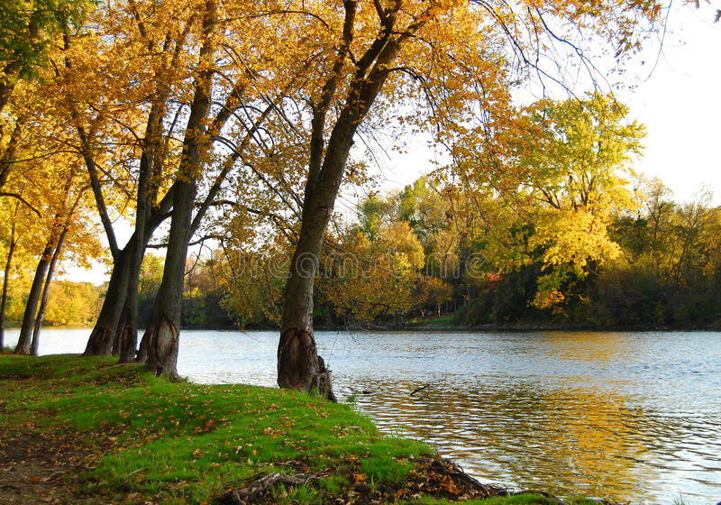 Autumn Riverbank Landscape. Autumn Riverbank and Trees Landscape royalty free stock images