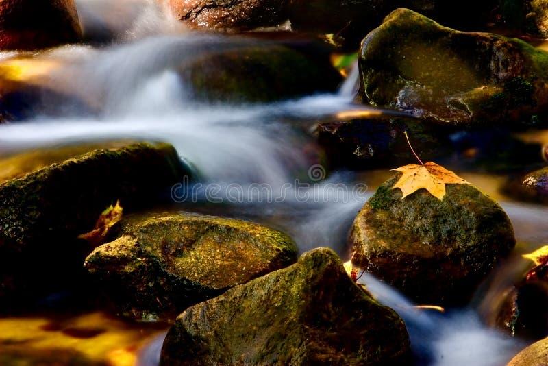 Autumn rivulet royalty free stock photo