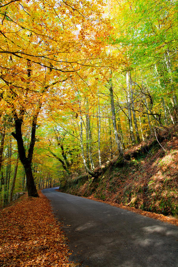 Download Autumn Road stock image. Image of leaves, fall, green - 17125225