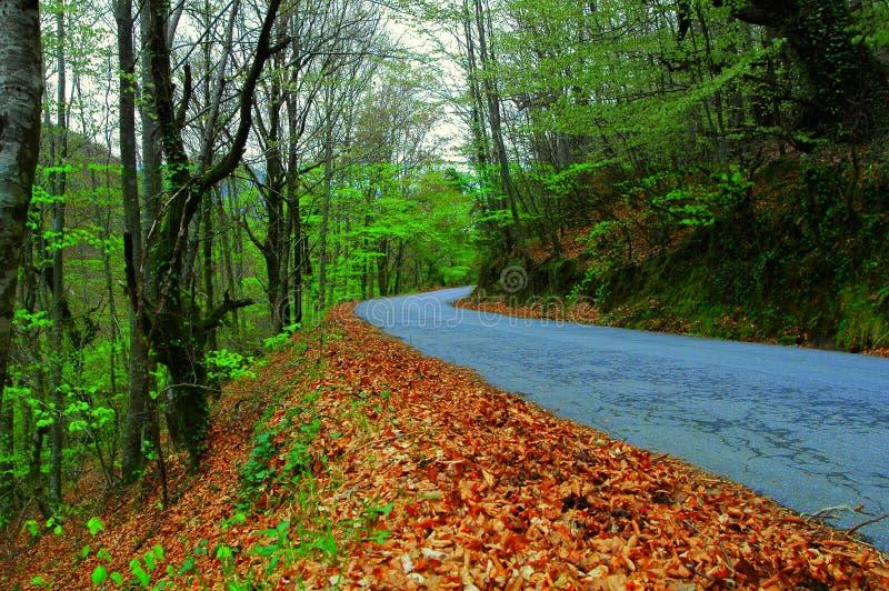Autumn road stock image