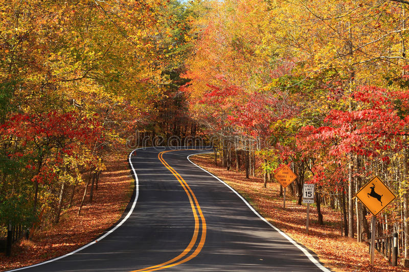 Download Autumn road stock image. Image of road, animal, leaves - 25449611