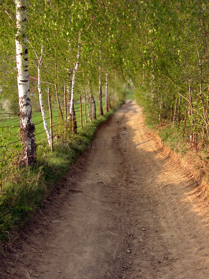 Download Autumn road stock photo. Image of outdoors, fall, birch - 25646
