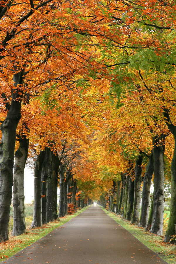 Autumn road. Endless road during autumn season stock photo
