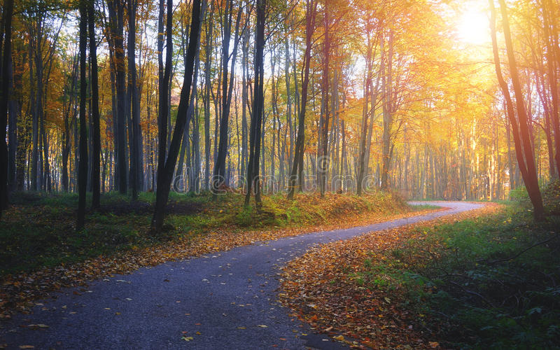 Autumn road in the colorful forest stock image