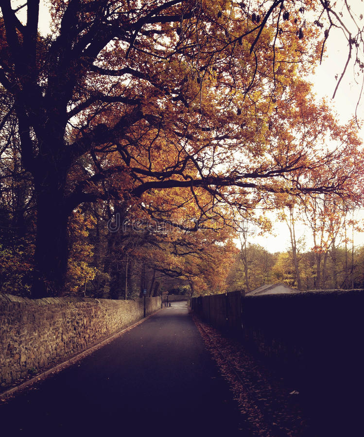 Autumn Road i Newcastle på Tyne royaltyfria bilder
