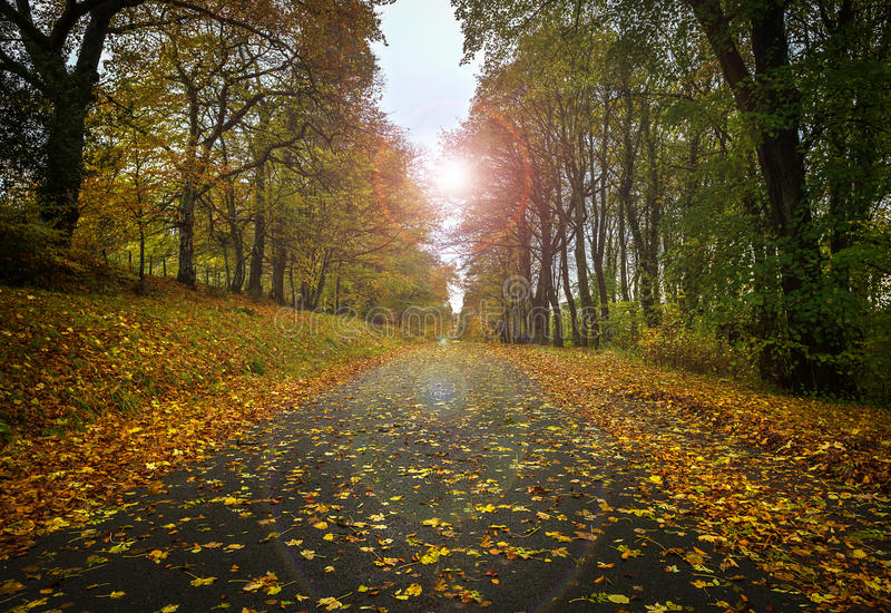 Autumn Road with Leaves stock image