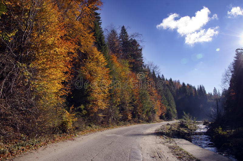 Download Autumn road stock photo. Image of forest, fall, trees - 30642782