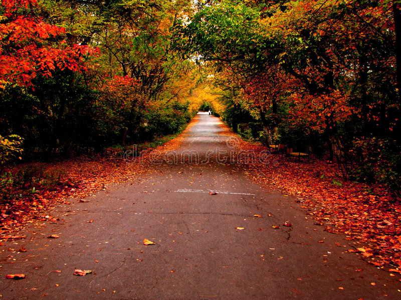 Download Autumn road in the park stock image. Image of colours - 7834681