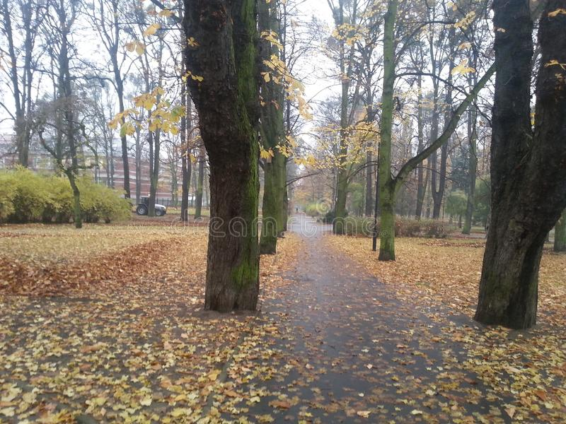 Autumn road through the park royalty free stock photography