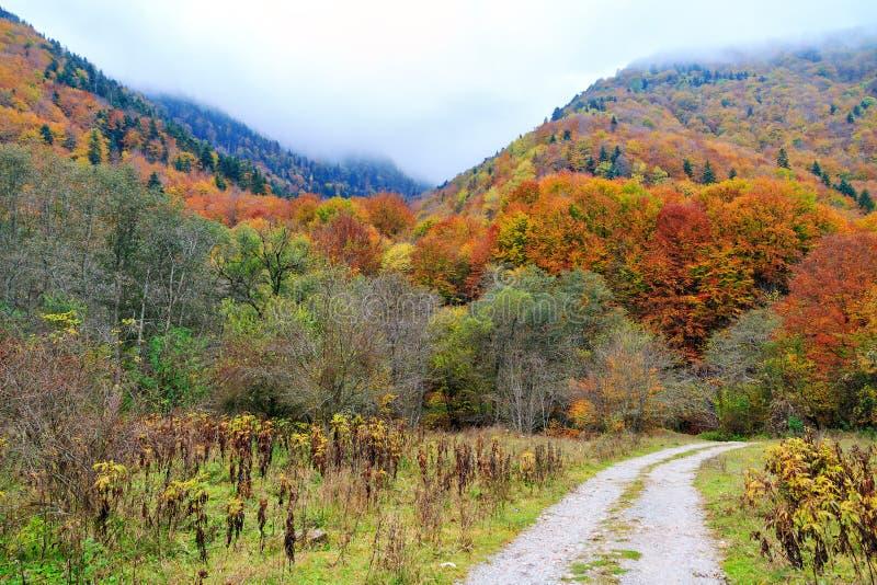 Autumn road Rila mountains stock image