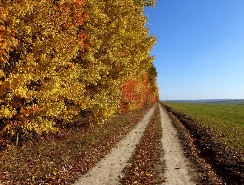 Autumn road. Sunny autumn day royalty free stock photos