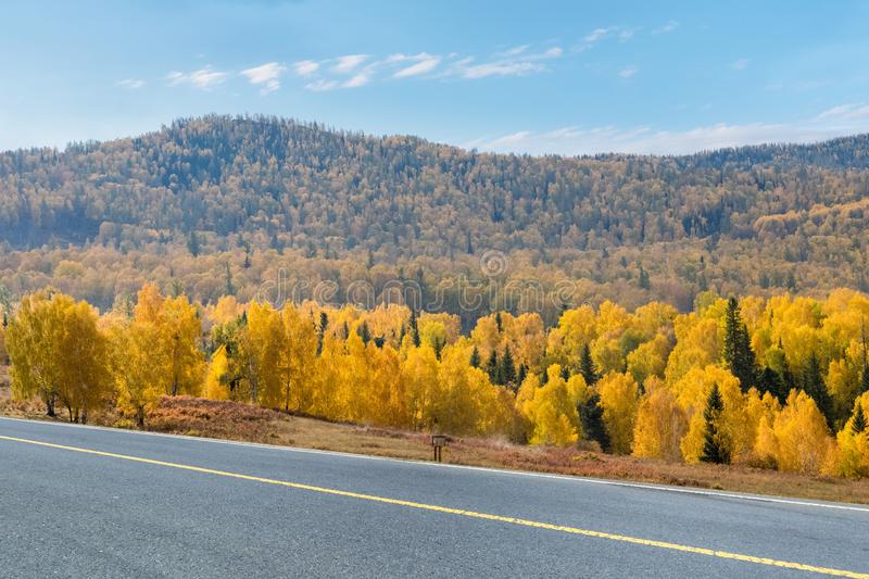 Autumn roads and boreal forest stock images