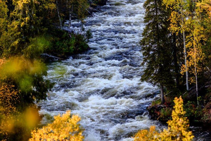 Autumn Roar imagenes de archivo