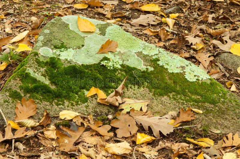 Autumn rock with fall leaves and lichen stock image