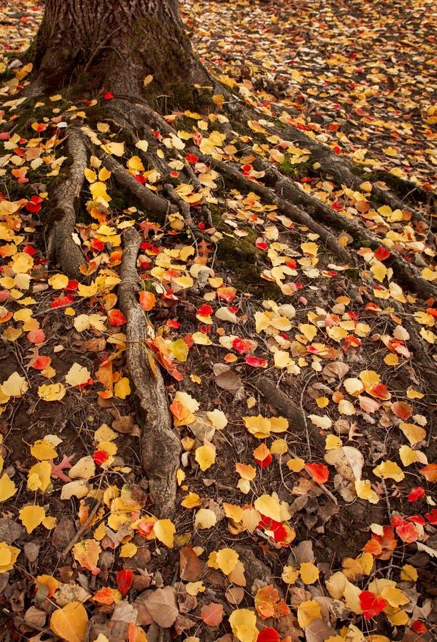 Autumn Roots fotos de archivo libres de regalías
