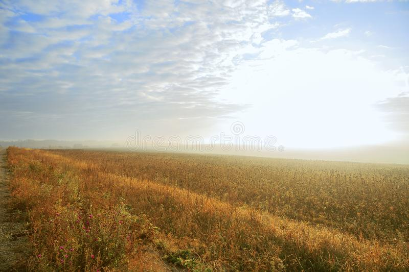 Autumn rural landscape. Fog at sunrise in a yellow golden field in the sunshine on a warm October day early in the morning against. A cloudy blue sky royalty free stock photography