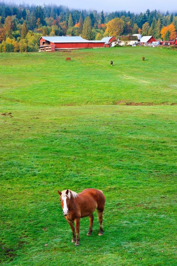 Autumn rural scenery, horse farm, Washington royalty free stock images