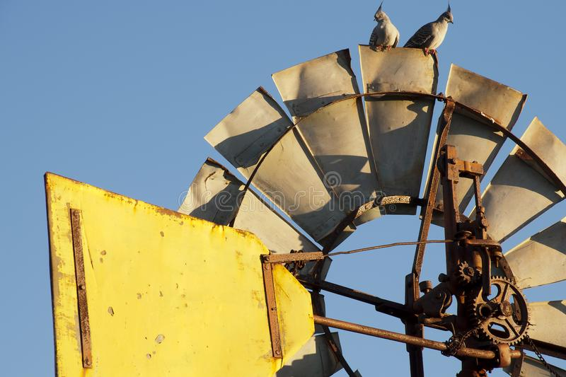 Topknot pigeons on top of windmill in the late afternoon sun. Autumn in rural South Australia around Quorn stock images