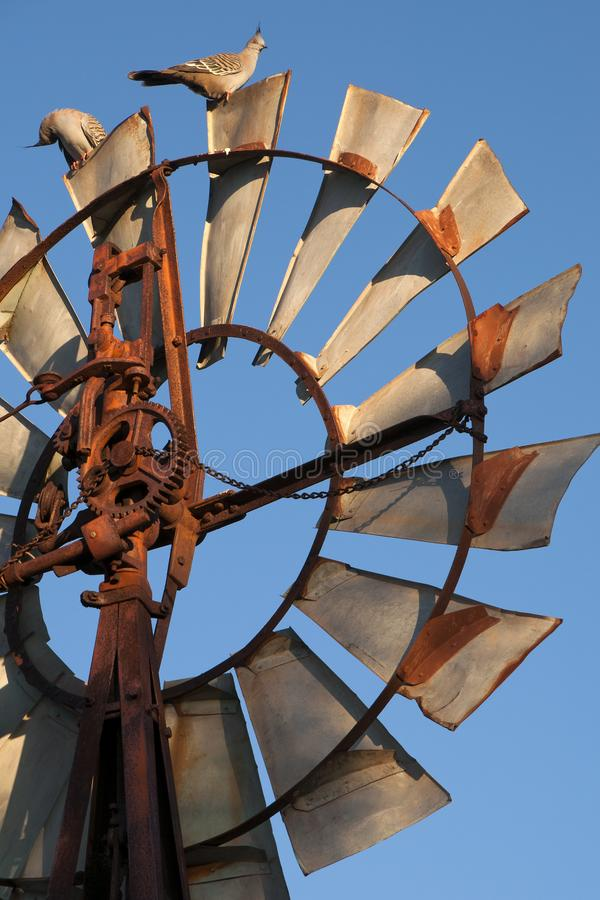 Topknot pigeons on top of windmill in the late afternoon sun. Autumn in rural South Australia around Quorn stock photography