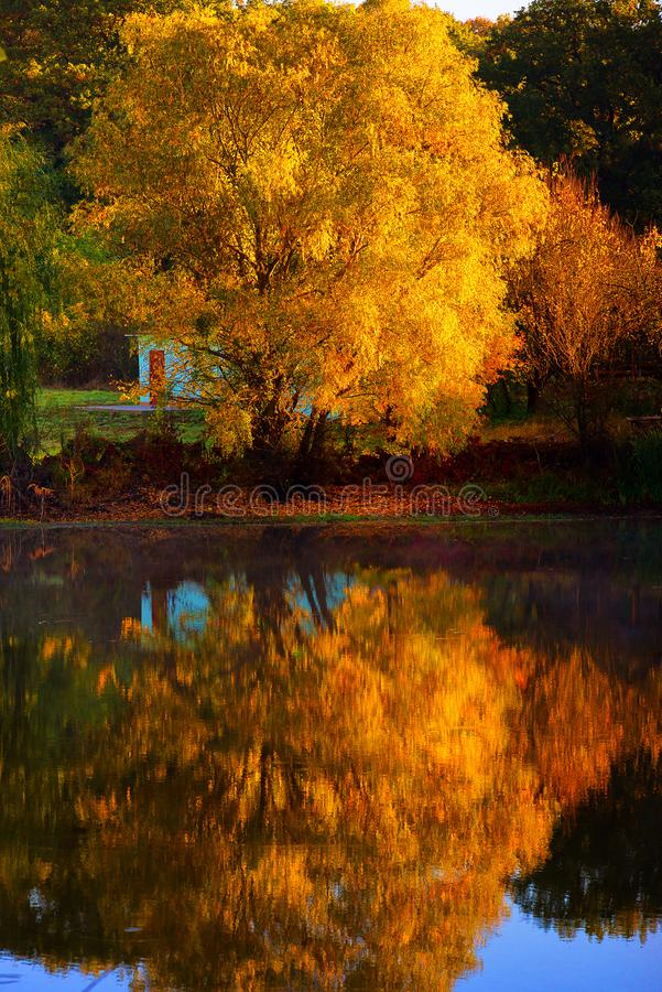 Autumn rustic forest landscape. Old tree reflecting in the water. Autumn stock photography