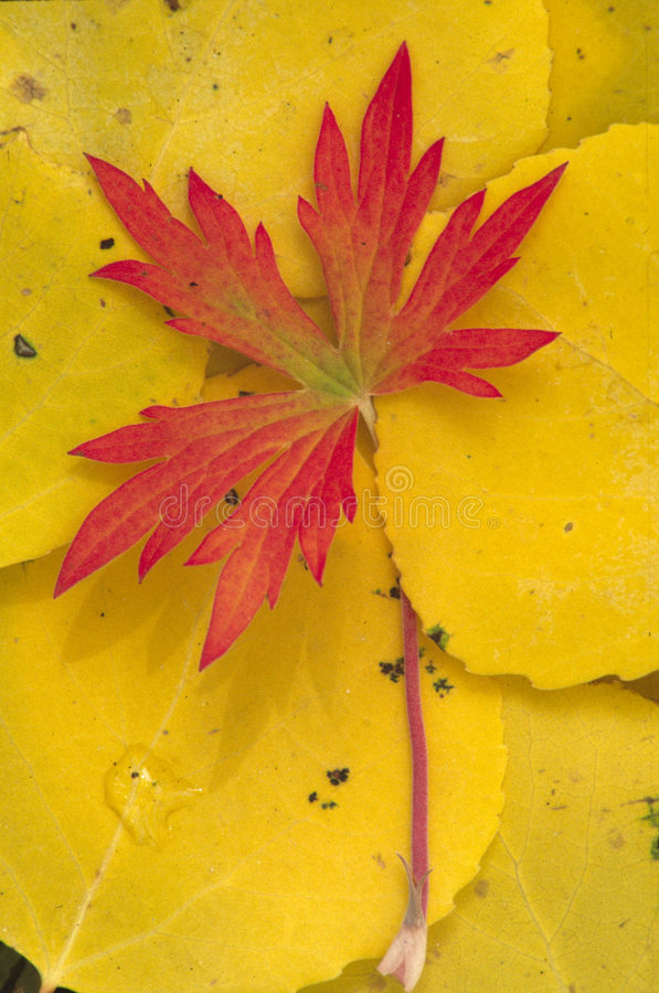Autumn S End Royalty Free Stock Images
